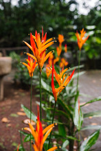 Orange Flower Of Green Grass