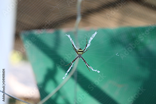 ORB WEAVER SPIDER (Araneidae) is one of the three largest spider groups Canvas Print