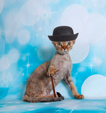 Cat On A Blue Background Hat