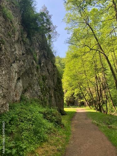 Obraz bory, krajobraz, zieleń, charakter, drzew, góra, lato, górka, odsłon, droga, rzeka, niebo, krajobrazowy, gras, tropikalna, podróż, außenaufnahme, opoka, dolina, park, drewna, okolica - fototapety do salonu