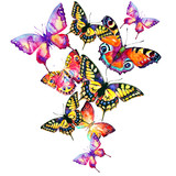 watercolor butterflies on a white