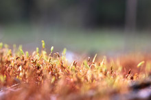 The Stems Of A Plant Growing On The Ground, Trees, Rocks. Soft Moss Underfoot In The Forest In Spring. Macro.