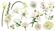 White Flowers Set, Watercolor ...