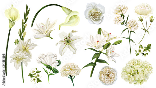 Fotografia White flowers set, watercolor hand drawn vector