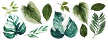 Monstera Leaves, Watercolor Br...