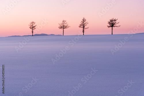 Valokuvatapetti 雪原に立つ4本の木