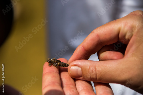 Photo Baby dragonfly in the hands of man in Barcelona, Spain