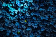 Full Frame Shot Of Blue Flowering Plants
