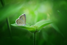 Beautiful Butterfly With Lovely Surrounding - Amazing Macro Photo Series
