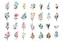 Wild Floral Watercolor Element Collection