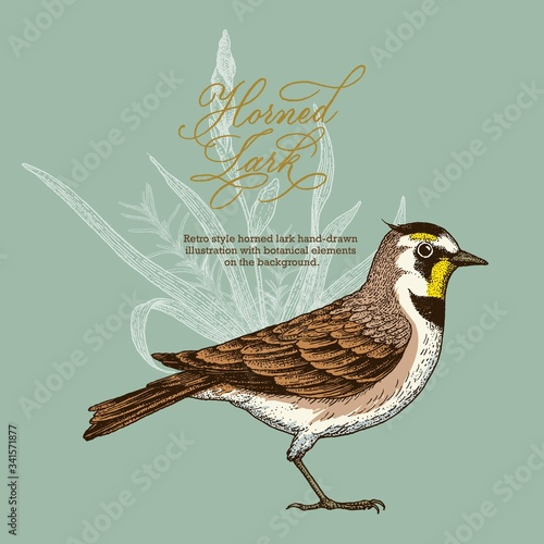 Valokuva Retro style horned lark hand-drawn  illustration with botanical elements  on the background