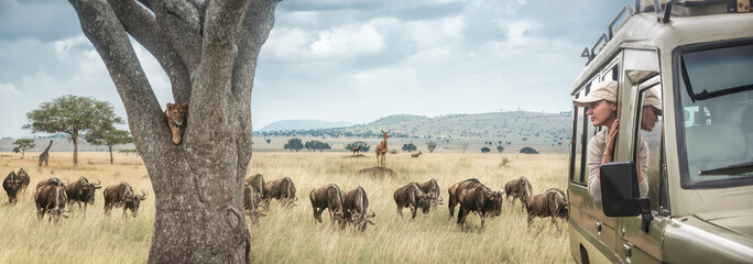 Woman traveller on safari in Africa, travels by car in Tanzania and Kenya, watches life wild tigers, giraffes and antelopes in the savannah.