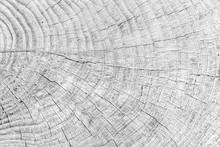 Close - Up Old Tree Stump Text...