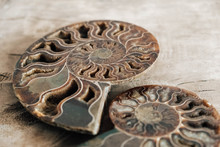Ammonites Fossil Shell On Wooden Background. Copy, Empty Space For Text. Polished Half Of Petrified Shells As Souvenirs, Gift