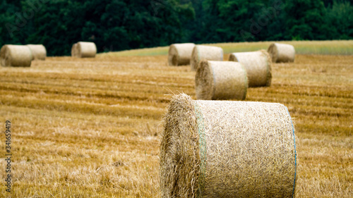 Fotografie, Tablou Hay Bales In Field