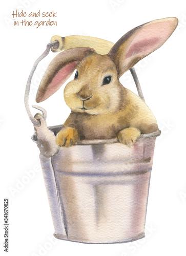 Fototapeta Cute rabbit