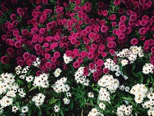 View Of Colorful Flower Bed