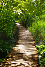 Summer Forest Walk. Touristic ...