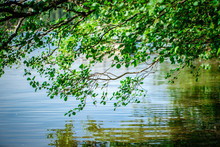 Branches With Green Leaves Ov...