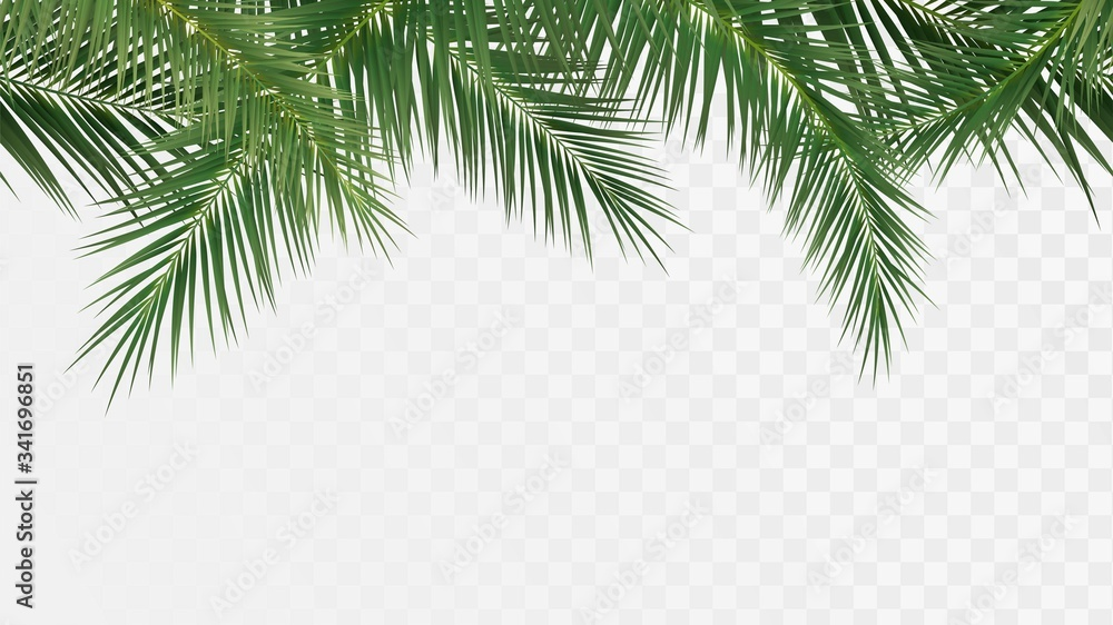 Fototapeta Palm branches seamless pattern, edge with tropical plants