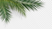 Palm Branches In The Corner, T...