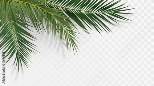 Palm branches in the corner, tropical plants decoration element