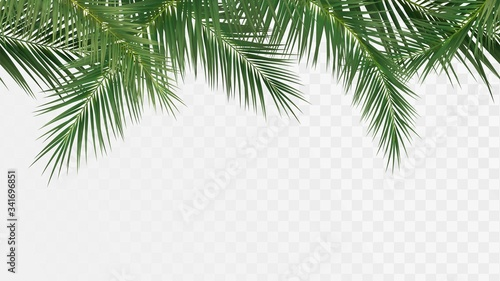 Palm branches seamless pattern, edge with tropical plants