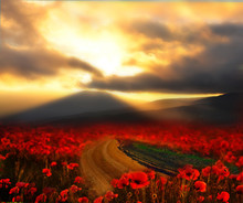 Dirt Road Among Poppy Fields At Sunset. Fantasy Picture. Blurred Focus.
