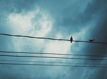 Two Birds Perching On Power Lines