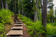 Wooden Steps On Hill In Forest