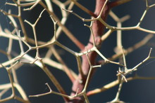 Close-up Of Dried Twigs Of Plant