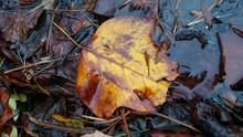 High Angle View Of Dry Leaves In Puddle