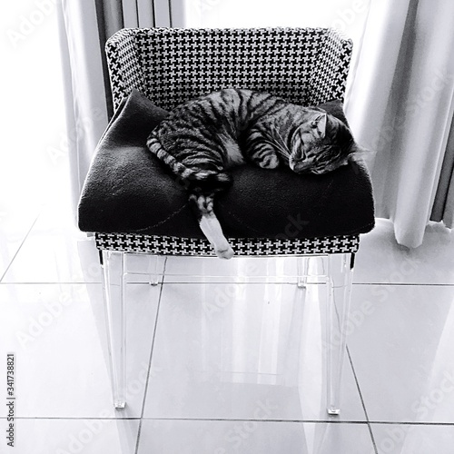 Photo Cat Sleeping On Blanket With Houndstooth Pattern Chair