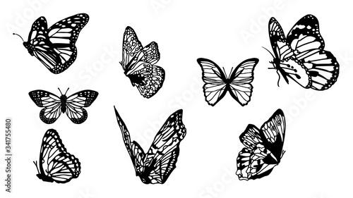 Obraz na plátně Butterflies carve set, Vector illustration.