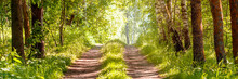 Pathway In Summer Light Forest