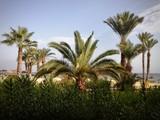 tropiki tunezja palmy lato widok krajobraz niebo plaża słońce