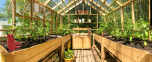 Panoramic View Of A Greenhouse With Plants Growing In June