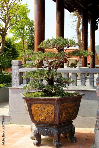 Fototapeta Bonsai tree in a large pot in the courtyard of a Buddhist temple in Vietnam obraz