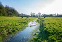 Countryside Stream Running Thr...