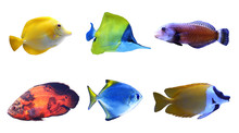 Set Of Different Bright Tropical Fishes On White Background