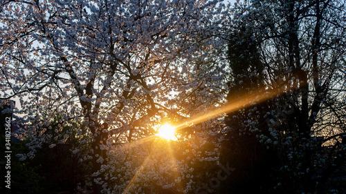 Fototapeta zachód słońca na tle drzewa obraz