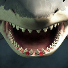 A Close Up Of A Great White Sh...