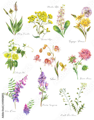 Leinwandbilder - Set of watercolor summer meadow flowers, wildflowers.