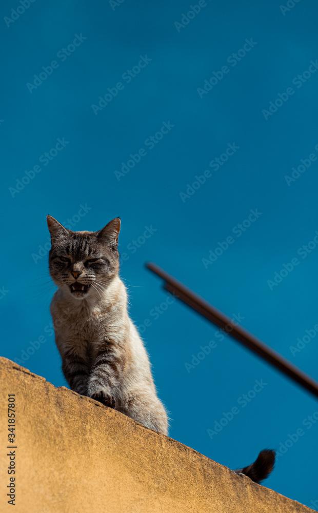 Fototapeta felino
