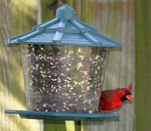 Male Bright Red Cardinal With ...
