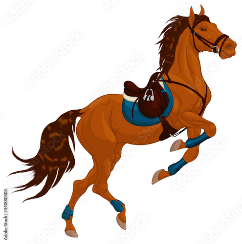 Fototapeta Bay horse reared and bent its front legs bandaged with polo wraps. Stallion dressed in sport tack including saddle, snaffle bit bridle. Steed pricked up its ears. Vector clip art for equestrian goods. obraz