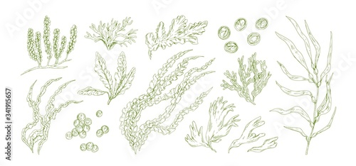 Collection of monochrome edible algae isolated on white background Canvas Print