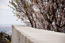 Surface Level Of Wall Next To Cherry Blossom Tree