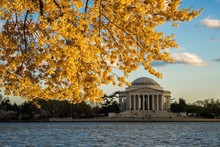 Autumn Leaves And Thomas Jefferson Memorial In Background