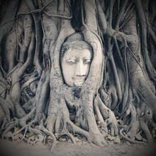 Buddha Statue Entwined In Roots Of Ancient Fig Tree At Wat Mahathat